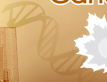 This strand of DNA represents the role that Canadian researchers have played in mapping out the human genetic code.